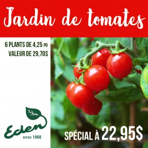 01_05_2020_special_tomates_carre